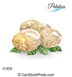 Potatoes - Watercolor Potato on White Background. Cute...