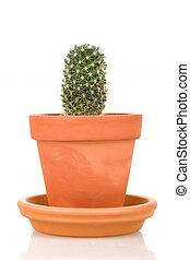 pote, cacto, isolado, planta, flor, branca