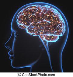 potente, mente, raggi x, cervello