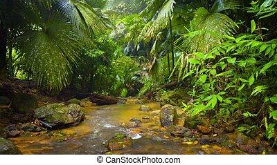 potok, las, inny, rośliny, drzewa, tropikalny, otoczony, egzotyczny, mokry, dłoń