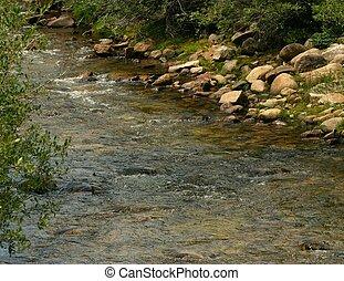 potok, pstrąg