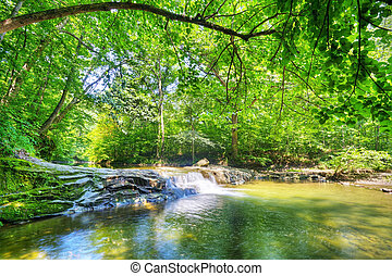 potok, w, przedimek określony przed rzeczownikami, las