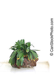 Potplant - Green plant in stone pot against white wall