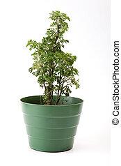 Potplant - simple plastic pot on white background, green ...