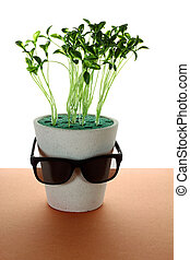 Potplant with Sunglasses on Wooden Background