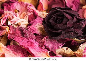 potpourri of dry rose petals