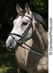 potrait, di, bello, cavallo, con, briglia