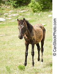 potro, caballo, en, pradera verde