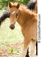 Potro, verde, caballo, pradera