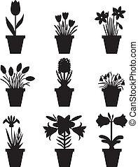 pots, fleurs, ensemble