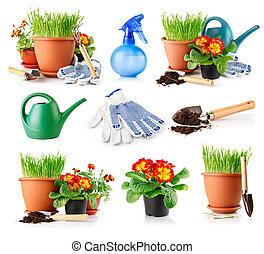 pots, fleurs, ensemble, herbe, jardin
