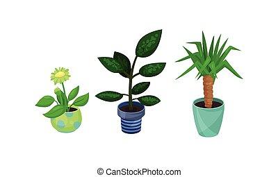 pots fleurs, maison plante, céramique, vecteur, ensemble, croissant