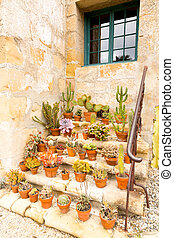 Pots of cacti on old stone steps