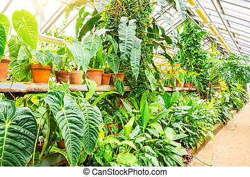 Pots with decorative deciduous tropical plants in a greenhouse garden.