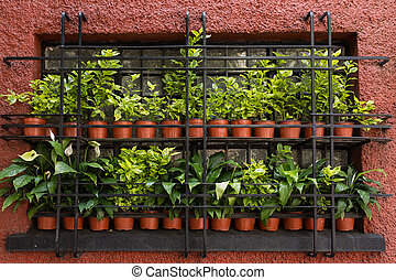 Pots with green plants in a window