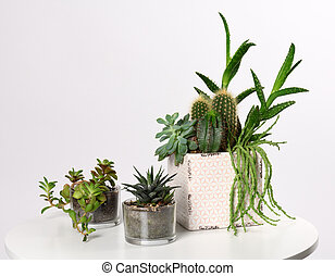 pots with mixed succulent plants