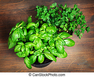 Pots with parsley and basil