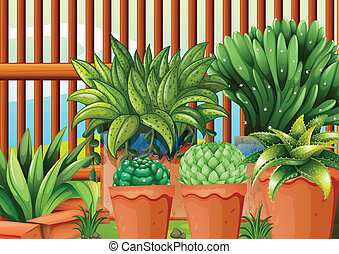 Pots with plants - Illustration of the pots with plants