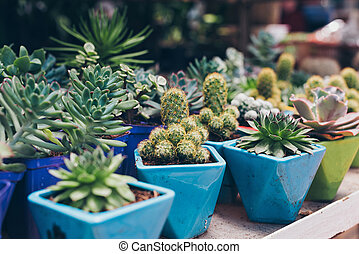 Pots with succulents in market - Cactus succulents in...