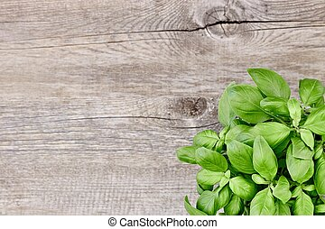 Potted Basil Plant - A studio photo of potted basil