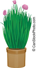 Potted Chives - Illustration Featuring Potted Chives