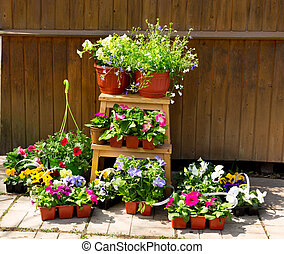 potted fleurit, outils, jardin