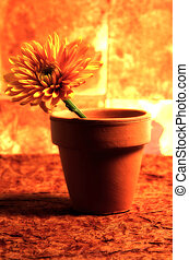 Abstract Photo of a Potted Flower. Color and Blur Effect.