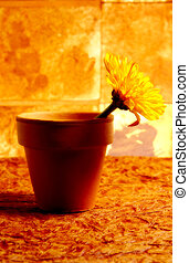 Potted Flower 2