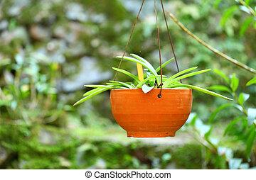 potted, planta verde