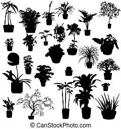 potted, plantas