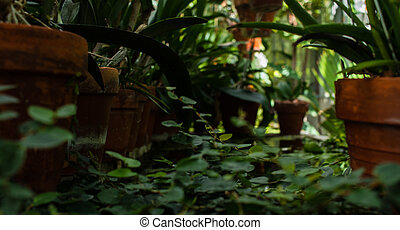Potted plants and ivy