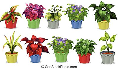 Potted plants - Different kinds of potted plants for...