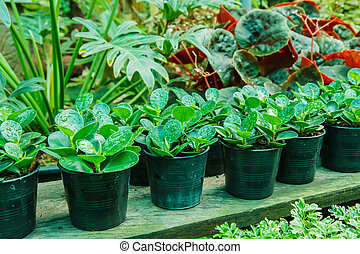 Potted plants in the garden