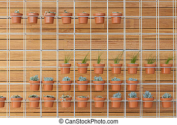 Potted plants on a wall