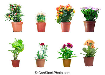 Potted Plants - Several potted plants isolated over white...