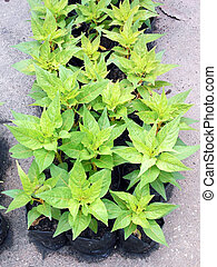 Potted seedlings growing in biodegradable peat moss pots