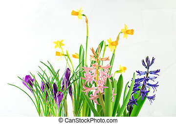 Potted spring flowers -