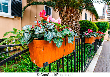 potted spring flowers on a fence, close up