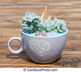 Potted succulent in a coffee pot. - Potted succulent in a...