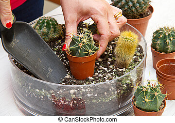 potted Various of small cactus in a glass pot