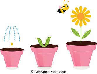 potten, groei, stadia, vrijstaand, bloem, witte