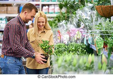 potten, kopen, paar, planten