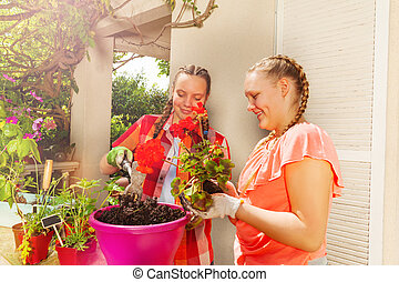 potting, flickor, två, geranium, le, röd, balkong