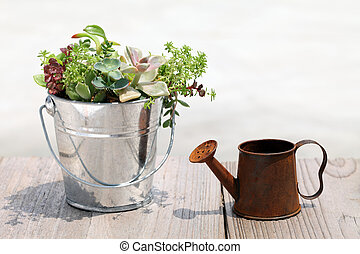 Pottted plant and watering can