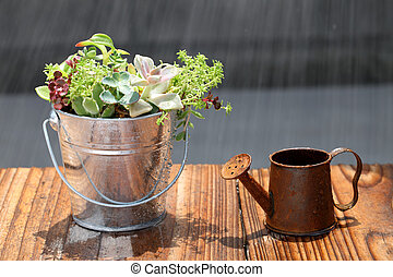 Pottted plant with a watering can