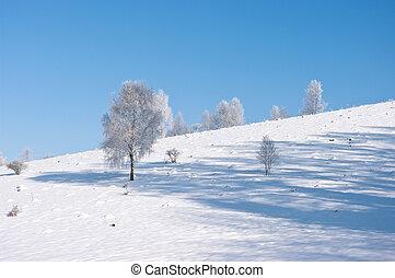 poucos, tranqüilo, árvores inverno, cena