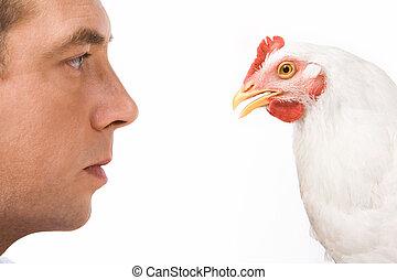 poule, profils, homme