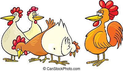 poules, coq