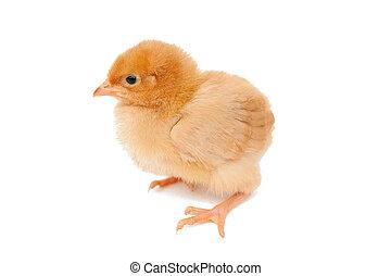 poulet bébé