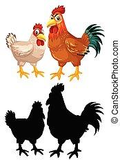 poulet, caractère, poule, coq